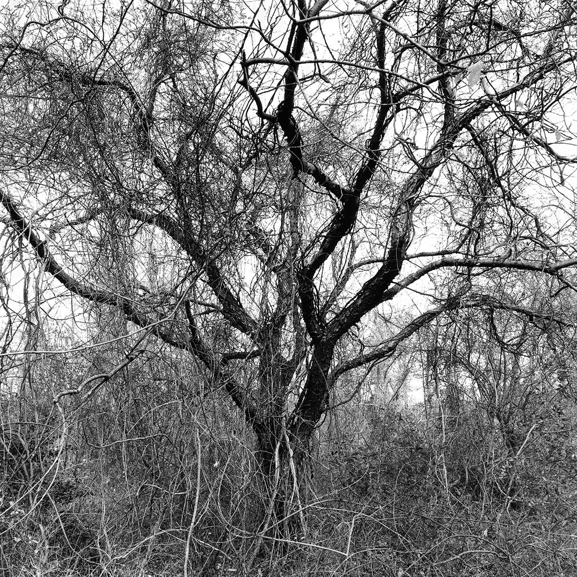 TREESTUDY140_2-copy